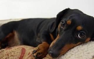 Защемление позвоночника у собаки симптомы