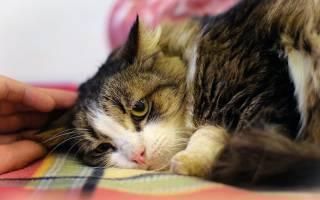Разнообразные болезни позвоночника у кошек: диагностика и лечение
