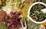 Травы для почек: лучшие рецепты, какие помогут