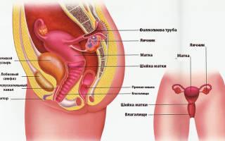 Боль в области таза слева у женщин