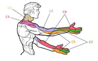 Лечение протрузии дисков шейного отдела позвоночника лечение Лечение позвоночника