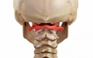 Строение позвоночника человека отделы, позвонки, анатомия, фото