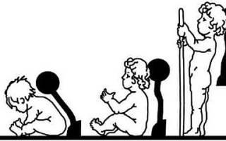 До какого возраста формируется позвоночник у человека