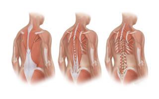 Упражнения для глубоких мышц позвоночника поясничный отдел