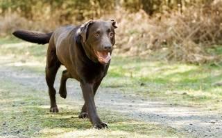 Повреждение позвоночника у собаки и уход за ней