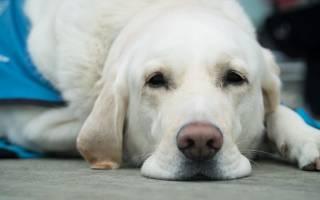 Грыжа шейного отдела позвоночника лечение у собак
