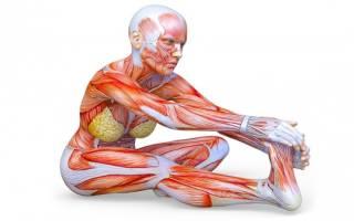 Какие упражнения надо делать для растяжки позвоночника