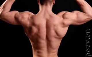 Какие мышцы спины держат позвоночник