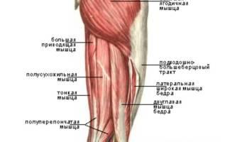 Строение ноги от колена до стопы